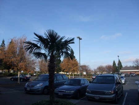 2009-12-19_07-15-59_0.JPG